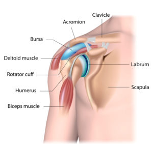Rotator Cuff Injury Exercises & Surgery Tampa
